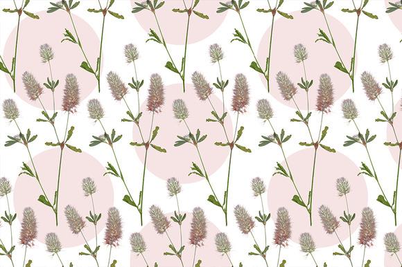 Fluffy Flowers Field Plant Seamless