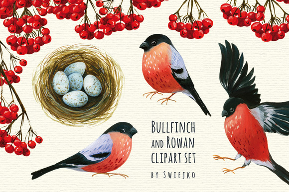 Bullfinch And Rowan Clipart Set