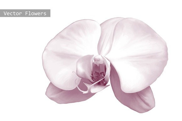 Orchid Purple Flower Vector