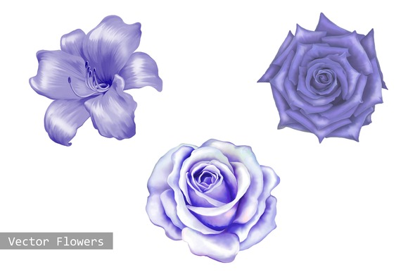 Purple Lily and Rose flowers. Vector - Objects