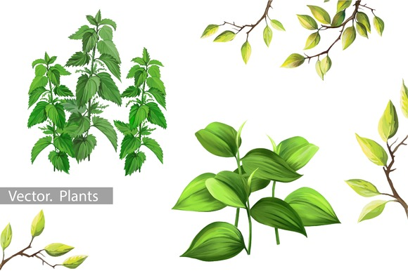 Plants And Leaves Vector