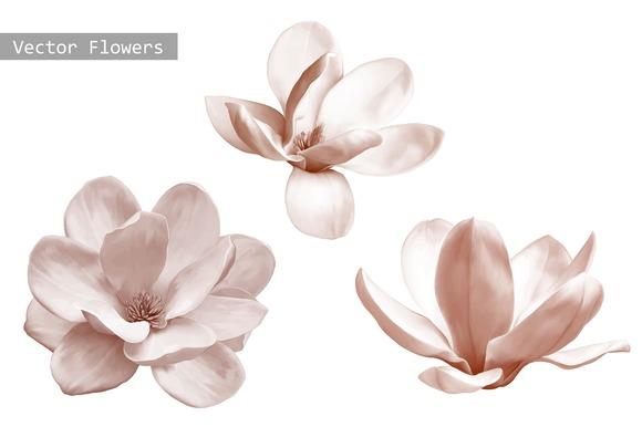Set Of Magnolia Flowers Vector
