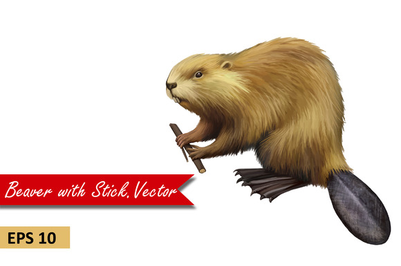 Beaver holding branch. Vector - Objects