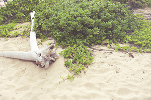 Kauai Beachfront