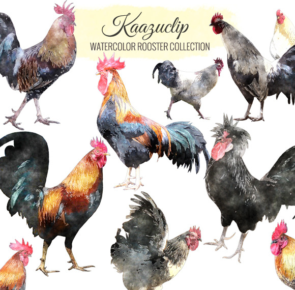 Watercolor Rooster Collection