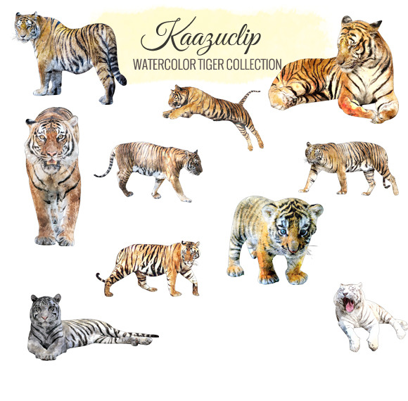 Watercolor Tiger Collection