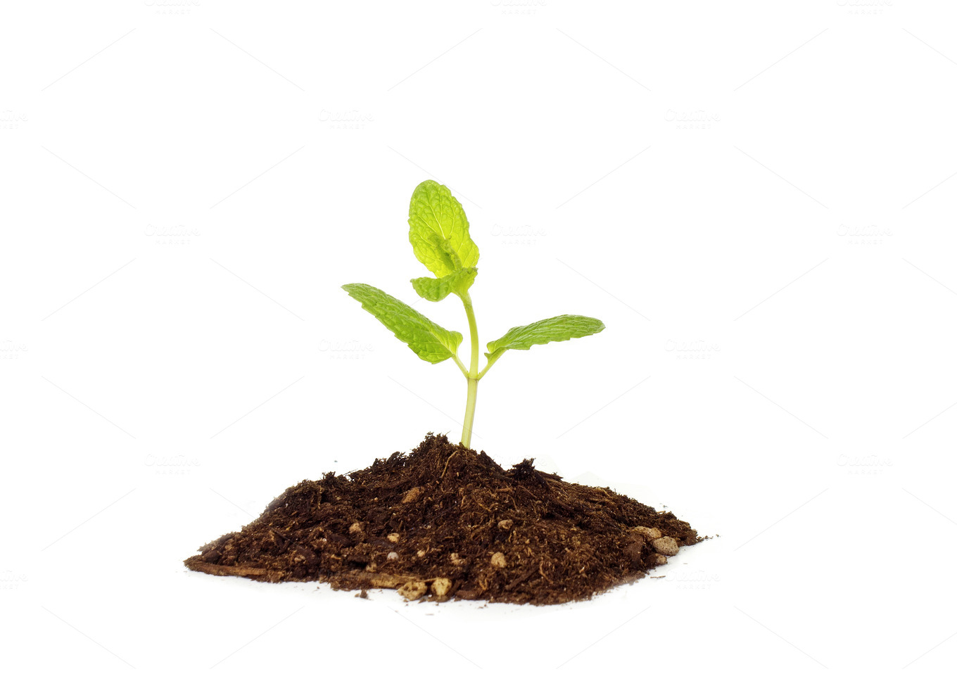 Tiny baby plant birth grow concept ~ Business Photos on Creative
