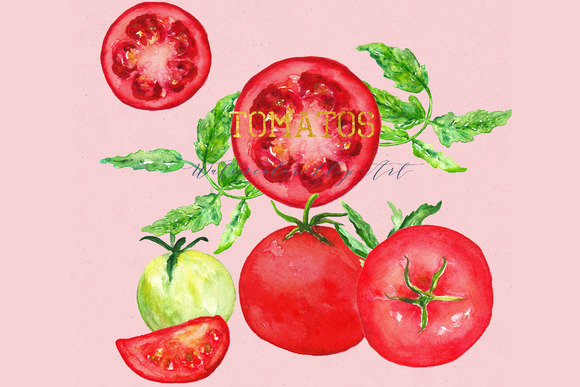 Tomatos. Watercolor Clip art. - Illustrations