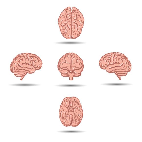 Set Of Five Cartoon Human Brains