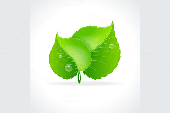 Glossy Green Detailed Leaves Vector