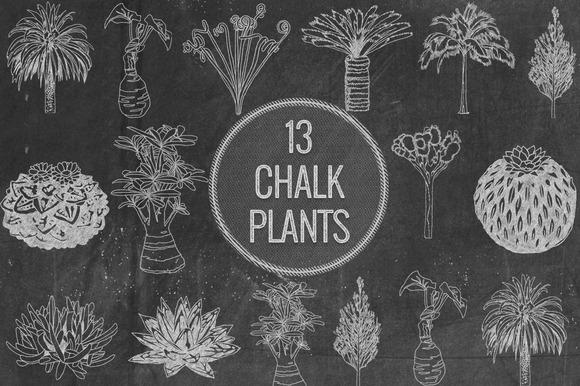 Chalk Plants