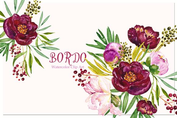 Peony Bordeaux. Watercolor Clip Art. - Illustrations
