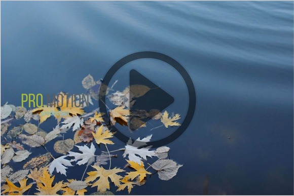 Yellow Autumn Leaves in Water. HD - Graphics