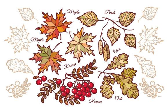 Autumn leaves. Set. - Illustrations