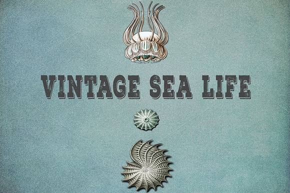 essay on ocean life