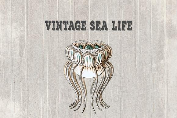 Vintage Sea Life IV Papers