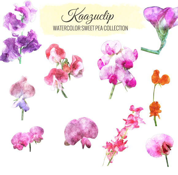 Watercolor Sweet Pea Collection