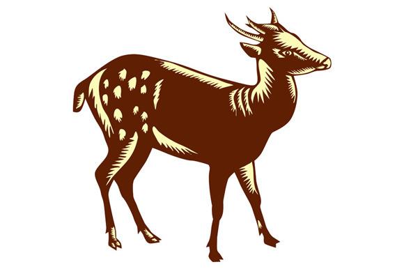 Deer Videohive Download » Maydesk.com