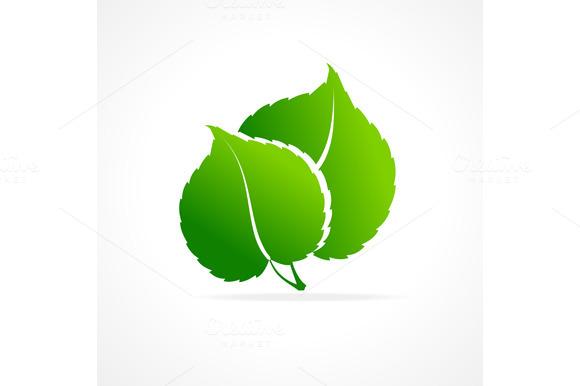 Ecology Concept Of Green Leaf