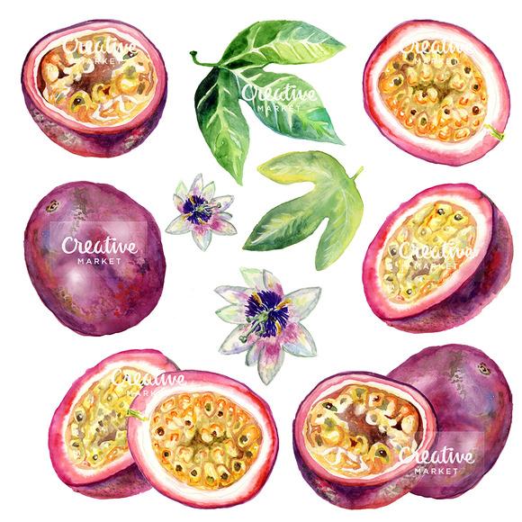 Passion Fruit Watercolor