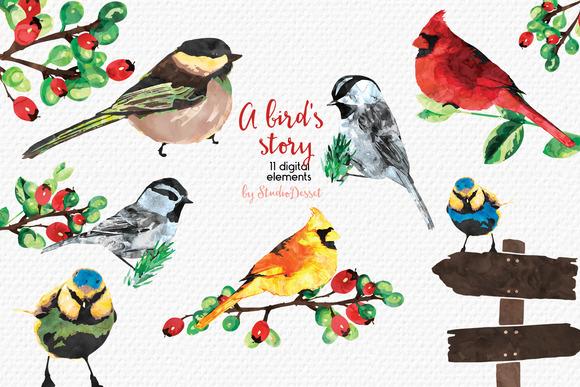 A Bird S Story