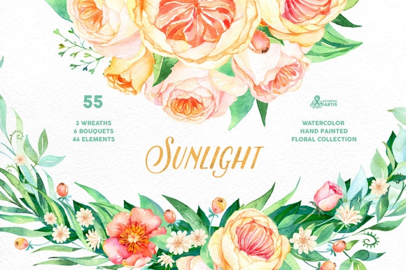 Sunlight. Floral Collection - Illustrations