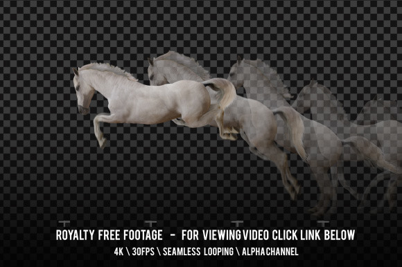 Horse White Jumping