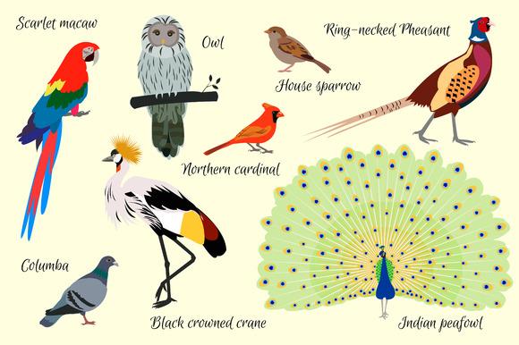 Set Birds