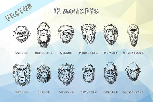 Monkey Vector Hand Drawn Portraits