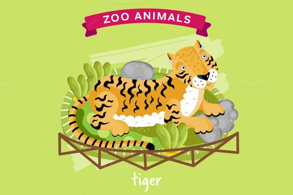 Zoo Animal Tiger
