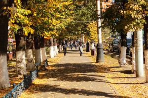 People. Autumn Leaves.