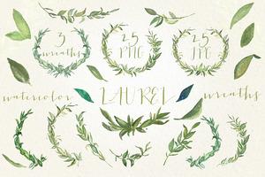 Laurel foliage wreaths. Watercolor.