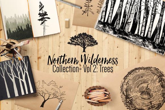 Northern Wilderness Trees