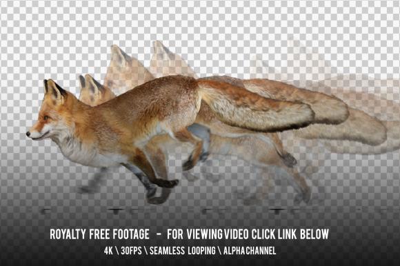 Fox Running