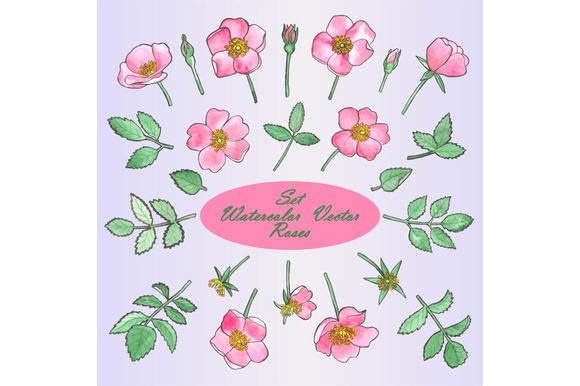 Watercolour Roses Set