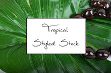 Tropical Styled Stock