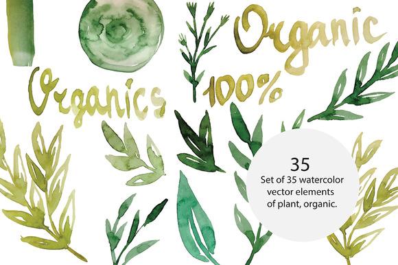 Organic Plants Vector