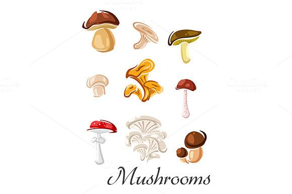 Edible And Toxic Mushrooms
