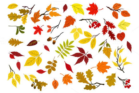 Autumn Leaves Acorns Berries