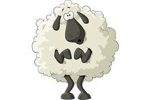Frightened sheep