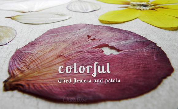 Colorful Dried Flowers And Petals