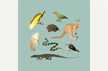 Set Of Different Australian Animals.