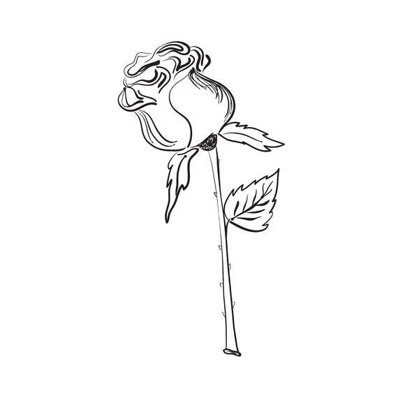 Vector Illustration Of Nice Rose