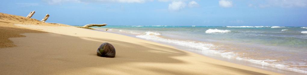 Beach Bum Chix
