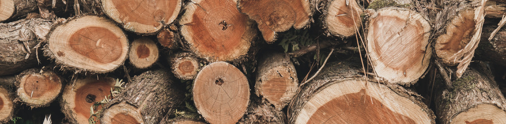 Musing Tree Designs