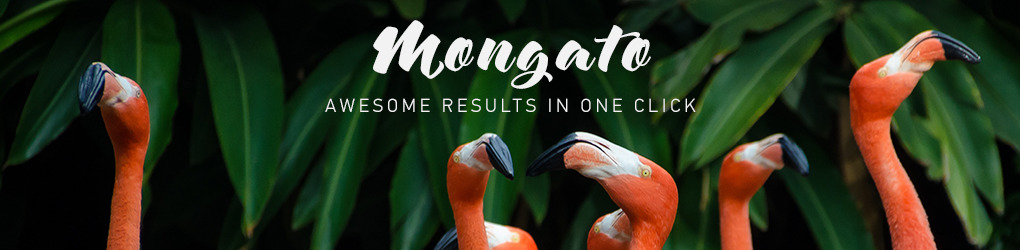 Mongato Goods