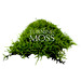 Turning Moss