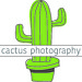 cactus___photography