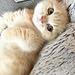 happy_cats
