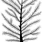 pineart